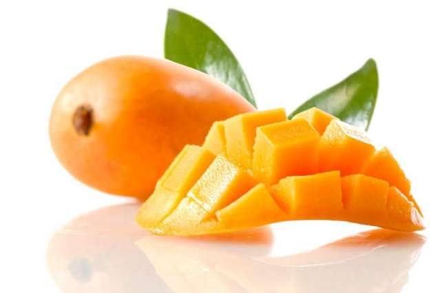 Guidelines to save mango varieties from Vivipary