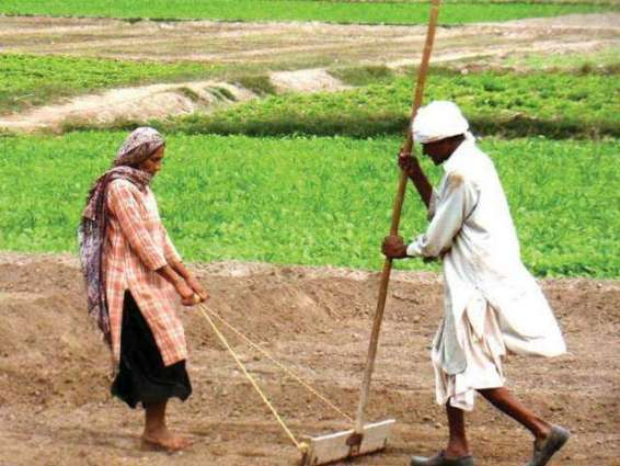 Over 5138 farmers registered for Kissan package