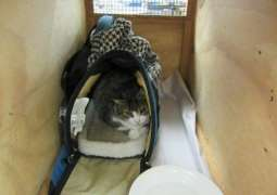 Kitty smuggler lets cat out of the bag in New Zealand