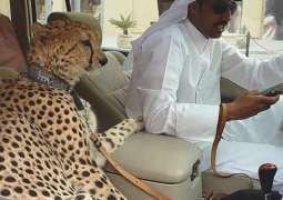 متحدہ عرب امارات وچ شیر تے چیتے ورگے جنوراں نوں پالتو جنور دے طور اُتے رکھنا غیر قانونی قرار