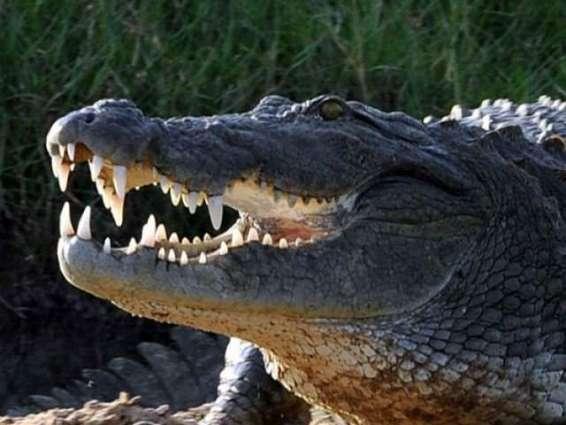 Snap! Selfie-seeking tourist bitten by Thai croc
