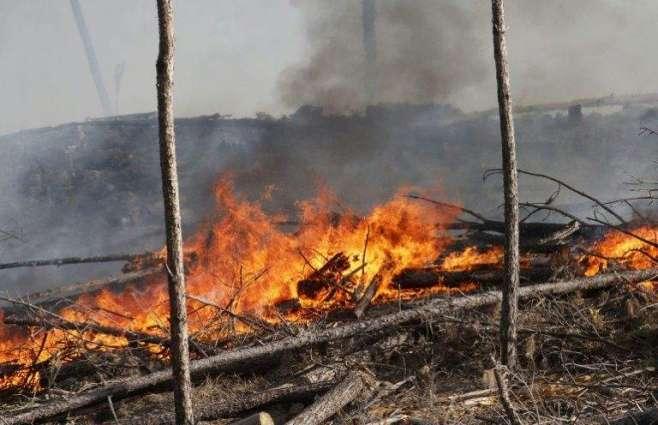 Argentine wildfires devastate pampas