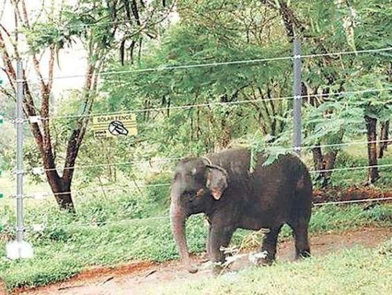 Wild elephant kills tourist in Nepal