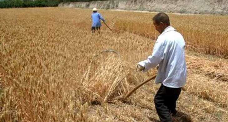 Farmers organizations support govt's steps: Kissan Mahaz