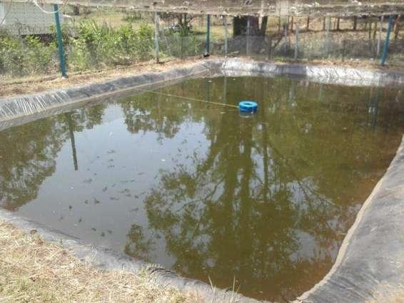 Farmers urged to focus on fish farming