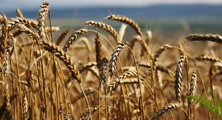 Netherlands hits bumper agriculture exports in 2016
