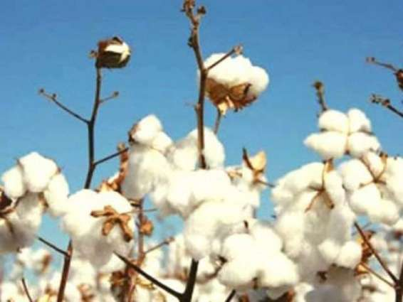 China's cooperation in cotton sector will be game changer: Dr Sagher