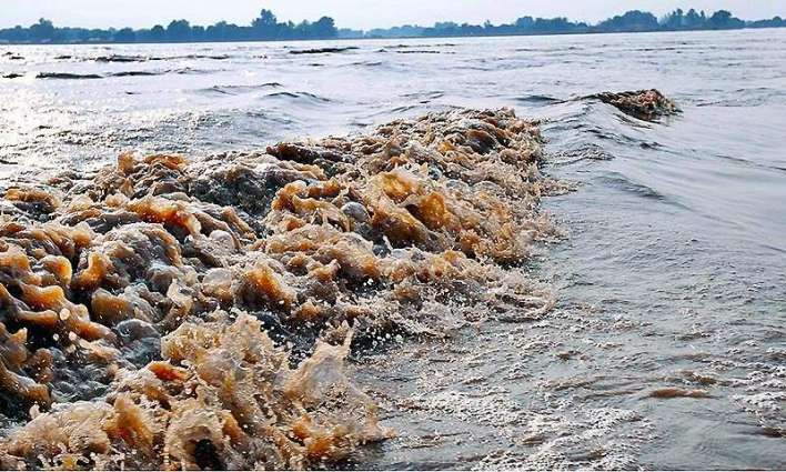 Sewerage water affecting fish in river Chenab