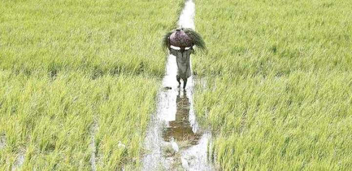 Agri-sector posts significant growth of 3.46% in 2016-17