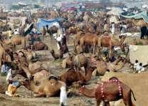 وڈی عید توں پہلے ہی ملتاں اچ کھلاں دیاں قیمتاں اچ گھٹکی