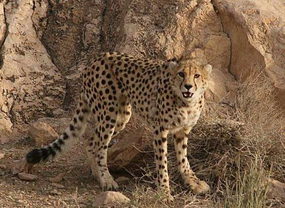 Efforts underway to save wildlife in GB