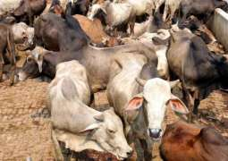 First ever Livestock herd book launched in Punjab