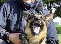 امریکا : کتے نوں وڈھن اُتے شہری خلاف مقدمہ درج