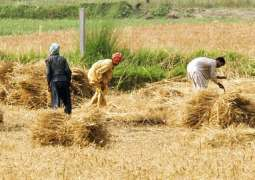 World Bank agrees to support agri, nutrition projects in Punjab, KP
