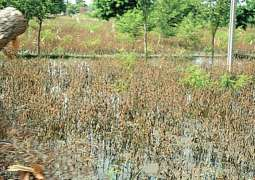 Rains to have positive impact on all Rabi crops