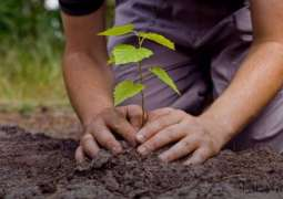 CDA's Spring Tree Plantation Drive to be held on Feb 15