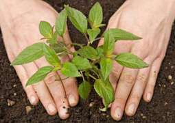 CDA launches spring tree plantation 2018 campaign