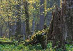 Poland's logging in ancient forest breaches EU law: court advisor