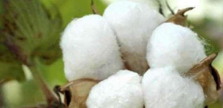 Spot rates of cotton (Crop 2017-18)