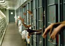 62 criminals held in Faisalabad