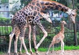 Punjab to establish four new zoos, renovate existing: Secretary Wildlife