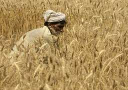 Food Department to issue gunny bags to wheat growers of Gujranwala Division from April 20