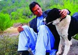 'Motu' still in Bani Gala with four other dogs: Imran Khan
