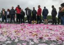 Bulgaria's rose surplus crushes petal prices