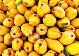 Pakistanis consider 'Mango' most favorite fruit during summer: Report