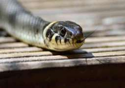 Snake found from Accountability Court during Nawaz Sharif's hearing