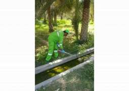Tadweer rolls out awareness drive to control mosquito breeding
