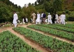 انٹرنیشنل میڈیا نے بلین ٹری منصوبے نوں پاکستان لئی چنگا قرار دے دتا