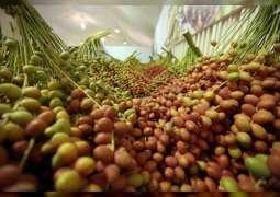 Abu Dhabi organises 14th Liwa Date Festival