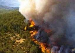 أوروبا تتعرض لموجة حر شديدة والحرائق تلتهم الغابات