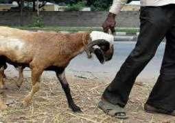 درندگی تے جہالت دی اخیر،حاملا بکری نال 8 بندیاں دی جنسی زیادتی