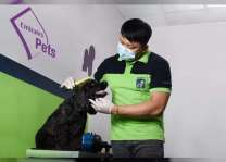 Emirates SkyCargo launches Emirates Pets