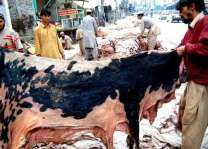Hide collection at 26 points in district in Faisalabad
