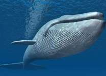 Ten-Million-Year-Old Whale Fossils Discovered at Crimean Bridge Construction Site