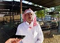 حركة شرائيه مكثفة لشراء الأضاحي بالمدينة المنورة