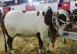Hustle and bustle in markets ahead of Eid-ul-Azha
