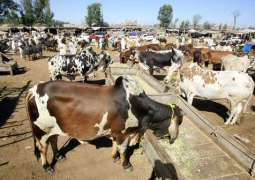 Traders advised to get sacrificial animals vaccinated