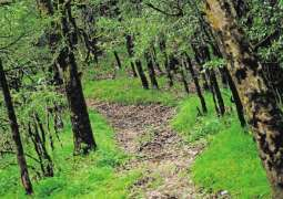 Revival of forestry resources aims to increase forest cover of country