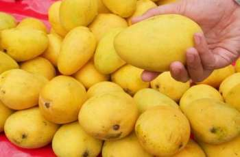 Pakistani mango export to China likely to exceed 10,000 tons this year