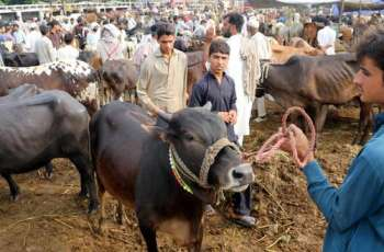 Last-minute rush at cattle markets across country