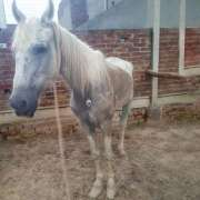 Conatural finds a weak, beaten up donkey, names it 'Leila'