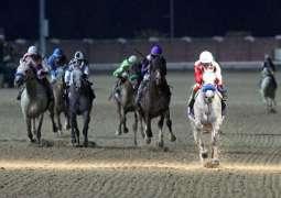 """""""كويك ساند"""" بطلاً للجولة الثامنة من كأس رئيس الدولة للخيول العربية الأصيلة"""