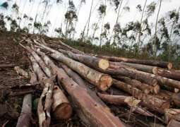 KP Govt plans to extend BTAP to tribal areas to plant 2b trees under 'Plant for Pakistan'