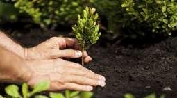 Tree plantation a moral obligation: FCCI