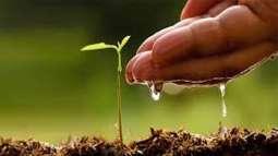 Plantation of 10,000 saplings starts in Multan