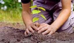 600,000 saplings planted in district: Deputy Commissioner Muzaffargarh